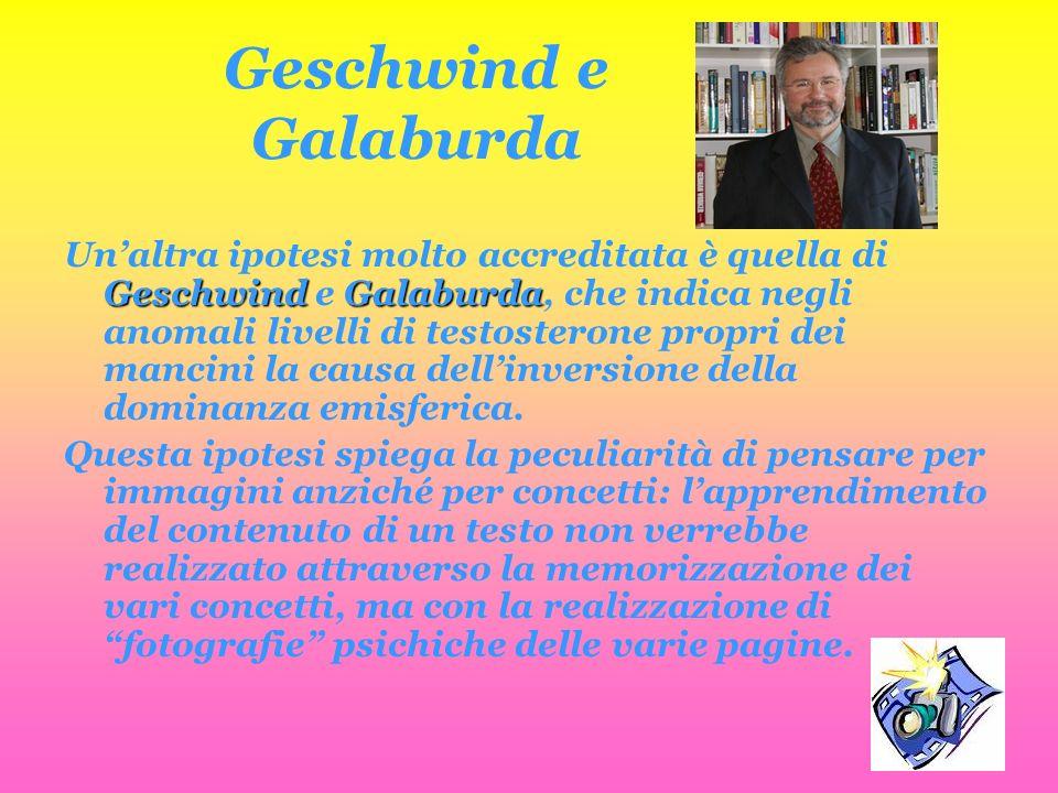 Geschwind e Galaburda Unaltra ipotesi molto accreditata è quella di Geschwind e G GG Galaburda, che indica negli anomali livelli di testosterone propr