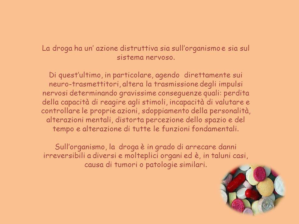 La droga ha un azione distruttiva sia sullorganismo e sia sul sistema nervoso. Di questultimo, in particolare, agendo direttamente sui neuro-trasmetti
