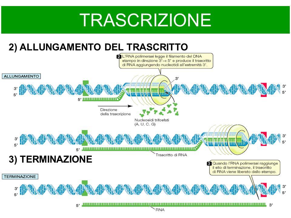 TRASCRIZIONE 2) ALLUNGAMENTO DEL TRASCRITTO 3) TERMINAZIONE