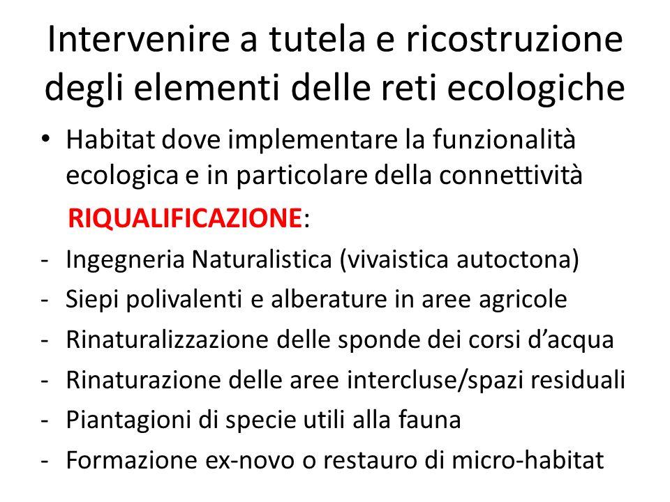 Intervenire a tutela e ricostruzione degli elementi delle reti ecologiche Habitat dove implementare la funzionalità ecologica e in particolare della c
