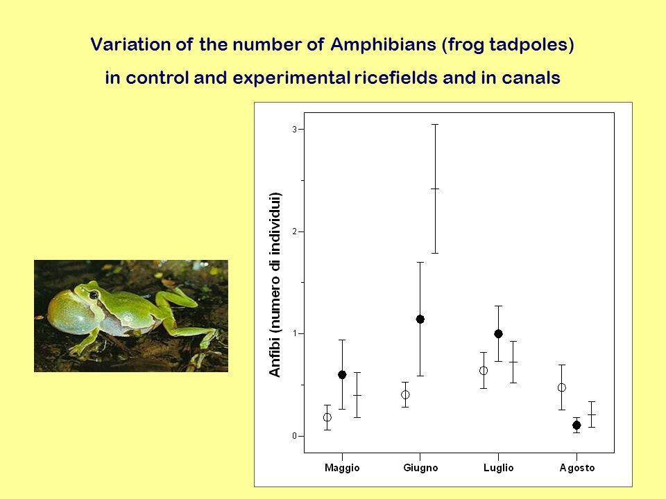 Variation of the number of Amphibians (frog tadpoles) in control and experimental ricefields and in canals