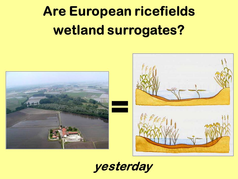 Results Experimental ricefields hosted more invertebrates and Amphibians than control ricefields.