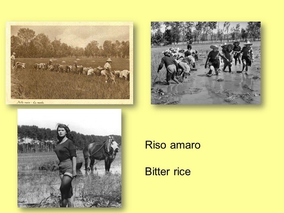 Riso amaro Bitter rice