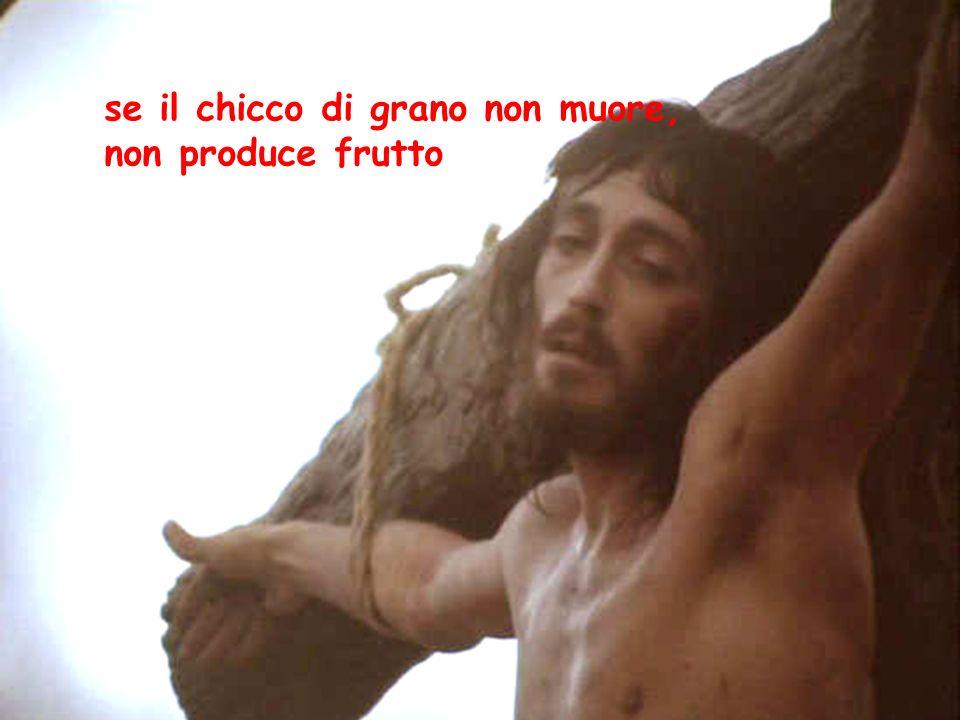 se il chicco di grano non muore, non produce frutto
