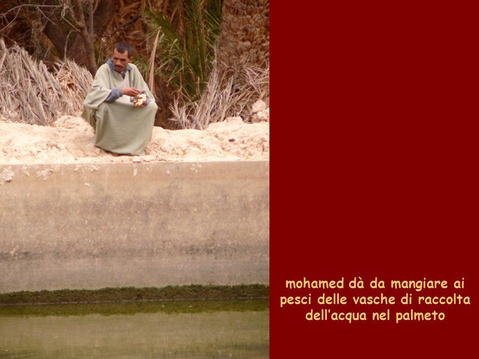mohamed dà da mangiare ai pesci delle vasche di raccolta dellacqua nel palmeto