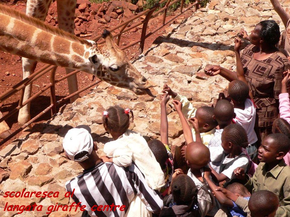 scolaresca al langata giraffe centre