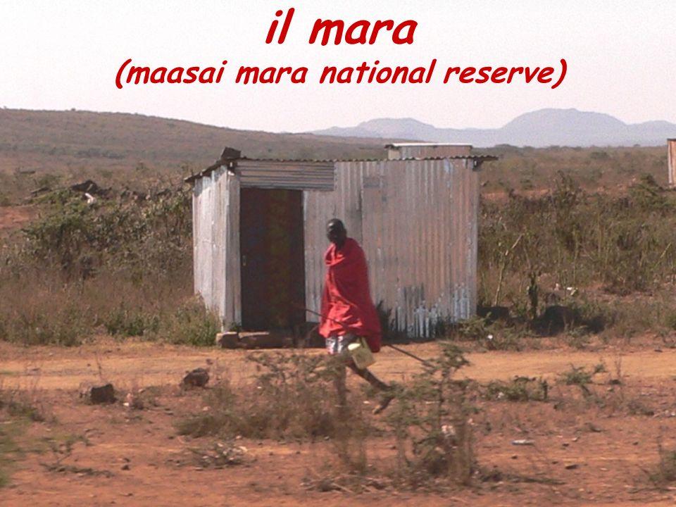 il mara (maasai mara national reserve)