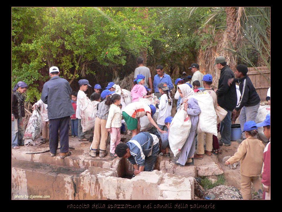 raccolta della spazzatura nei canali della palmerie