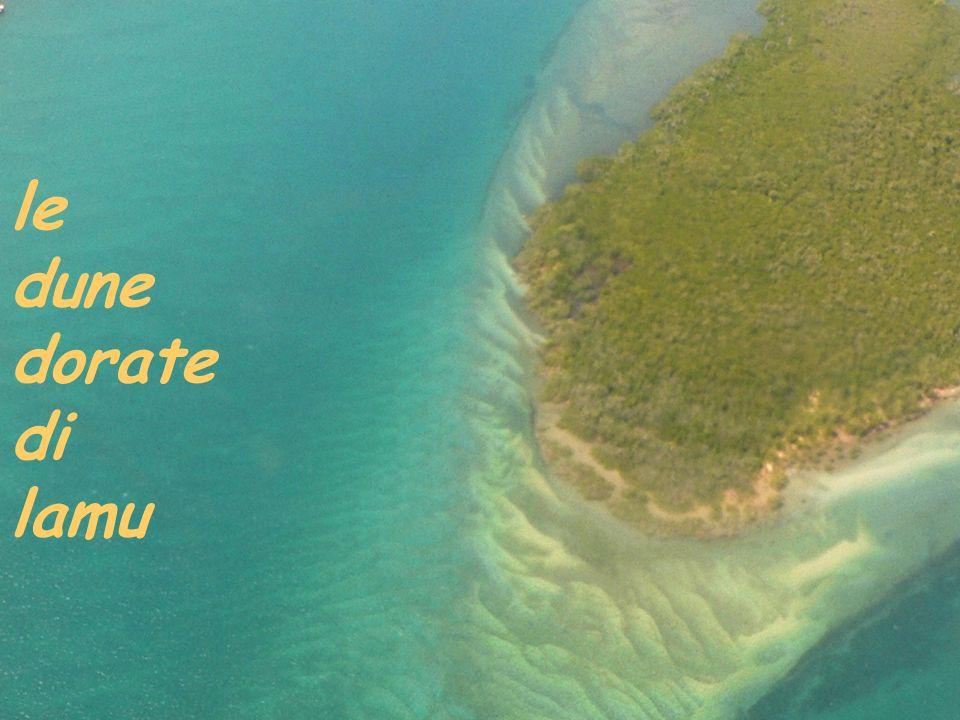 le dune dorate di lamu