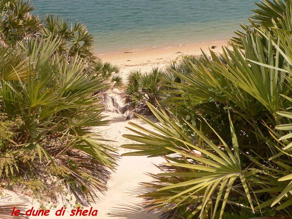 le dune di shela
