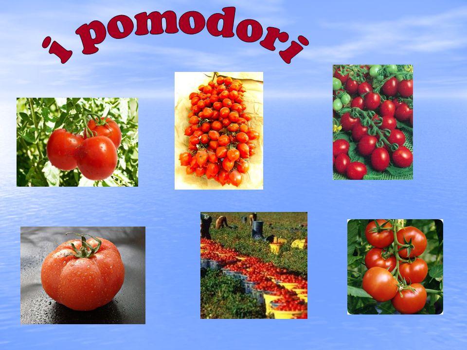 Il pomodoro è la coltura orticola più importante al mondo sia se si considera la destinazione industriale sia quella per il consumo fresco.