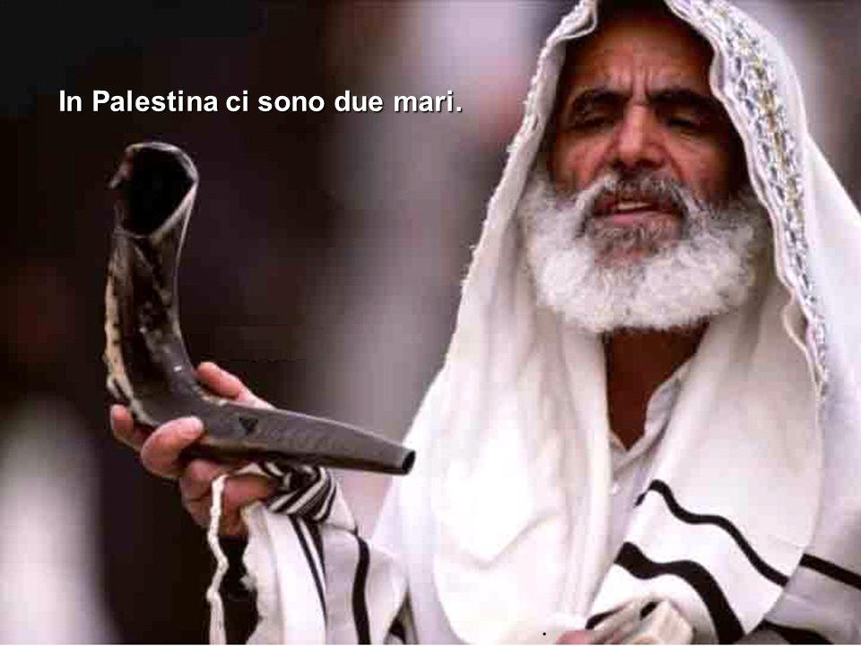 In Palestina ci sono due mari..
