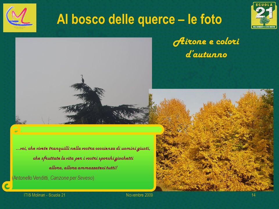 ITIS Molinari - Scuola 21Novembre 200914 Al bosco delle querce – le foto Airone e colori dautunno...voi, che vivete tranquilli nella vostra coscienza