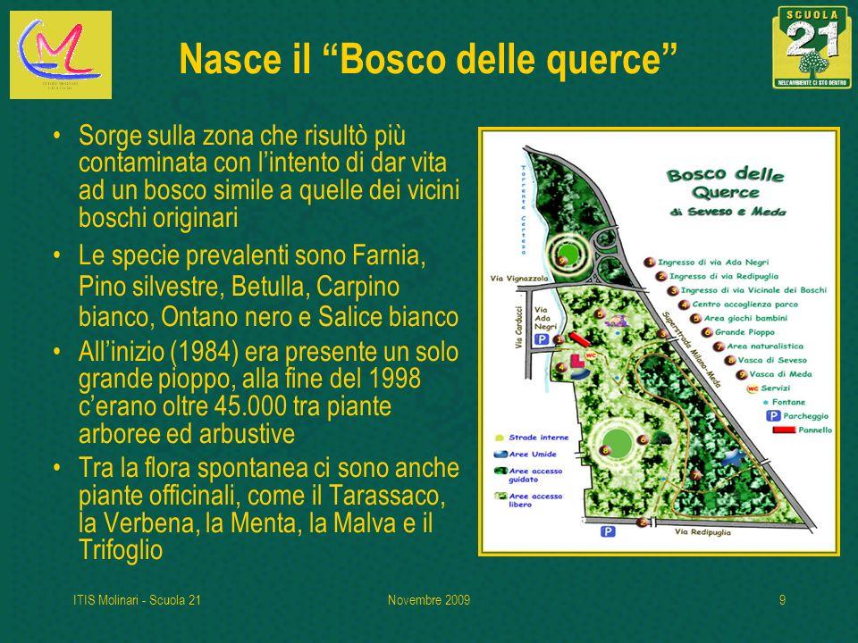 ITIS Molinari - Scuola 21Novembre 20099 Nasce il Bosco delle querce Sorge sulla zona che risultò più contaminata con lintento di dar vita ad un bosco