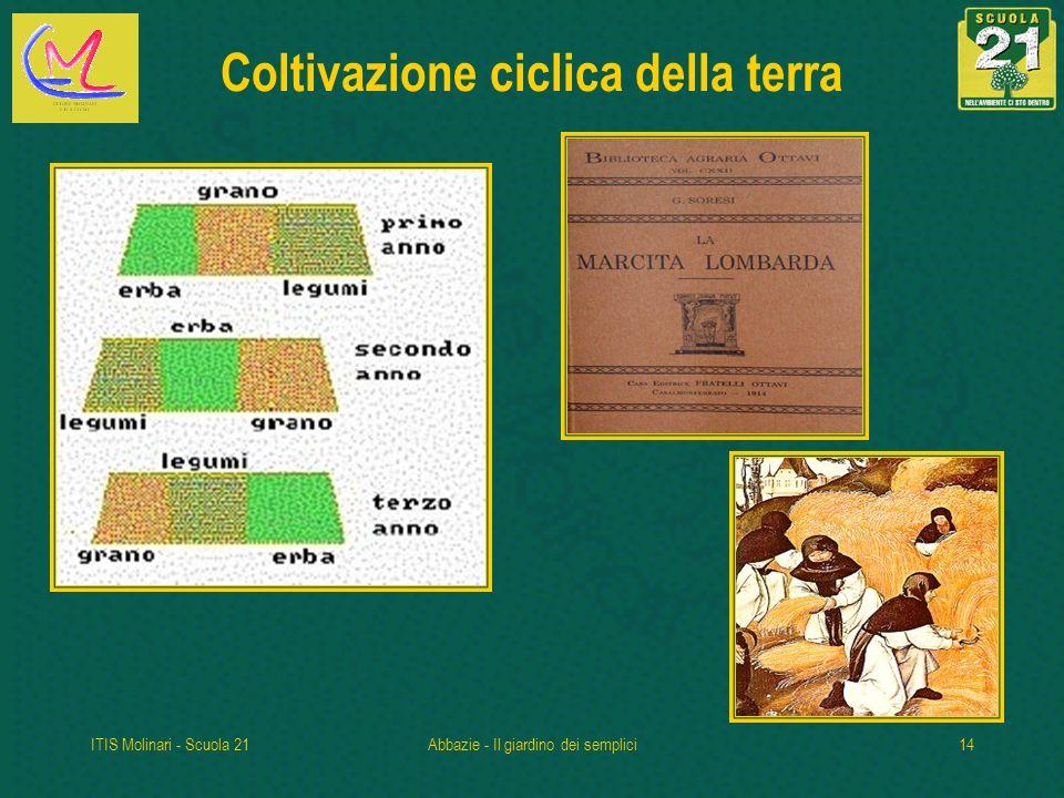 ITIS Molinari - Scuola 21Abbazie - Il giardino dei semplici14 Coltivazione ciclica della terra