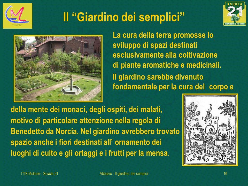 ITIS Molinari - Scuola 21Abbazie - Il giardino dei semplici16 Il Giardino dei semplici La cura della terra promosse lo sviluppo di spazi destinati esclusivamente alla coltivazione di piante aromatiche e medicinali.