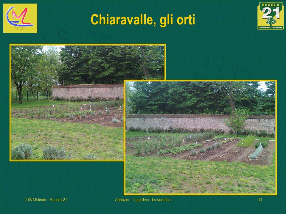 ITIS Molinari - Scuola 21Abbazie - Il giardino dei semplici30 Chiaravalle, gli orti