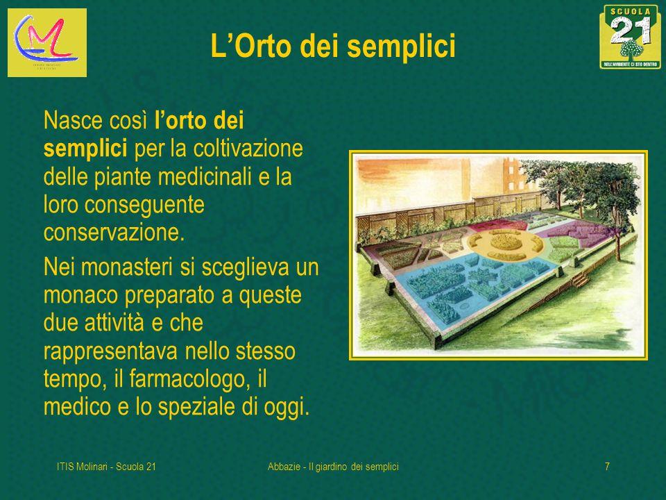 ITIS Molinari - Scuola 21Abbazie - Il giardino dei semplici7 LOrto dei semplici Nasce così lorto dei semplici per la coltivazione delle piante medicinali e la loro conseguente conservazione.