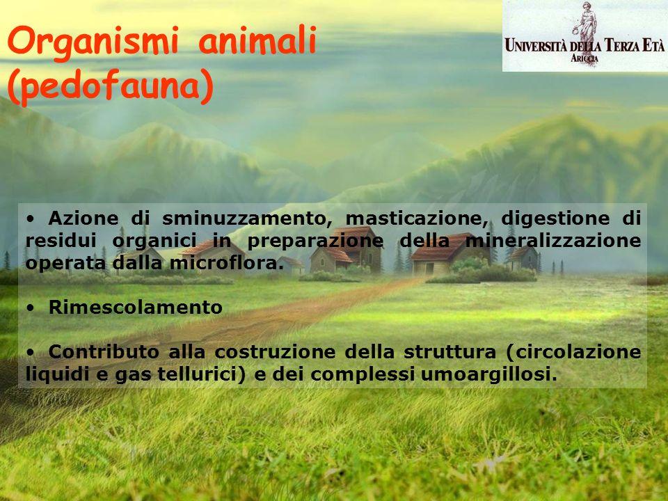 Organismi animali (pedofauna) Azione di sminuzzamento, masticazione, digestione di residui organici in preparazione della mineralizzazione operata dal