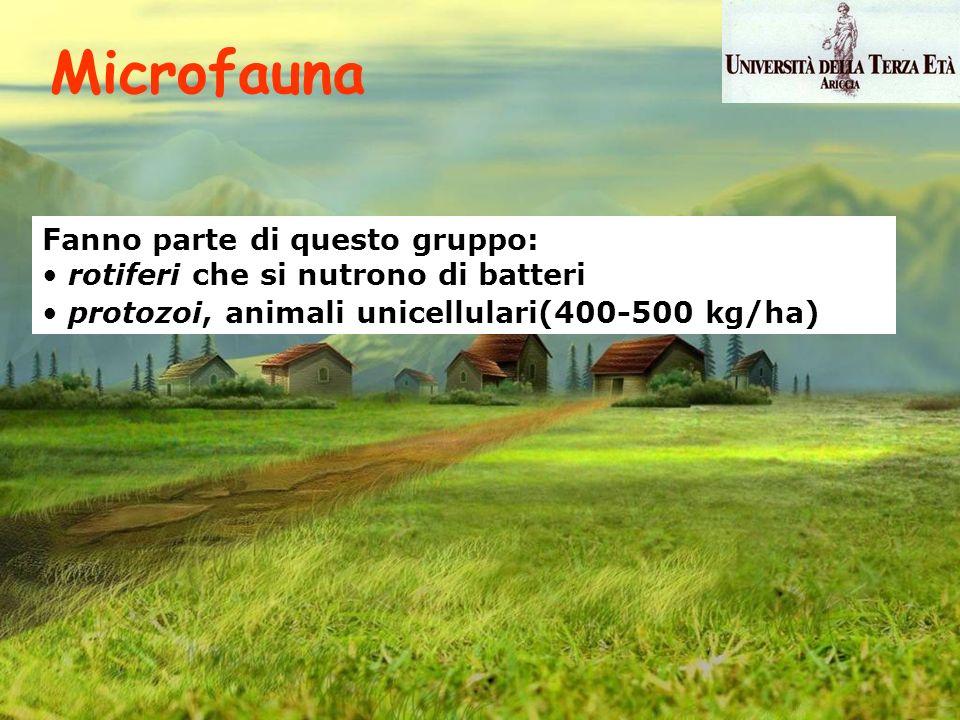 Microfauna Fanno parte di questo gruppo: rotiferi che si nutrono di batteri protozoi, animali unicellulari(400-500 kg/ha)