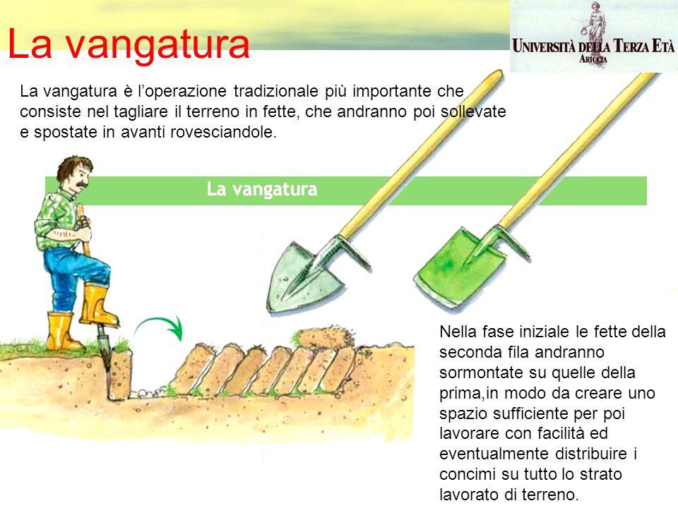 La vangatura La vangatura è loperazione tradizionale più importante che consiste nel tagliare il terreno in fette, che andranno poi sollevate e sposta