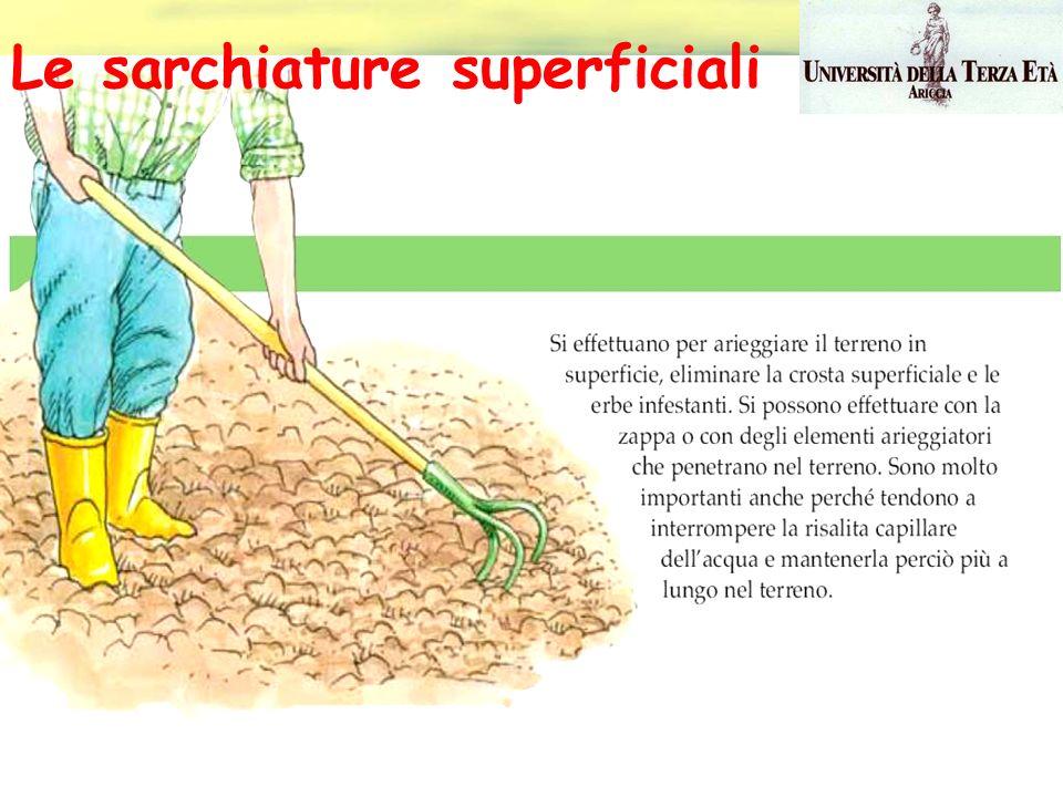Le sarchiature superficiali