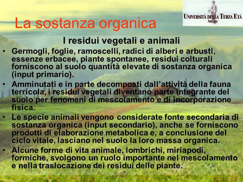 I residui vegetali e animali Germogli, foglie, ramoscelli, radici di alberi e arbusti, essenze erbacee, piante spontanee, residui colturali forniscono