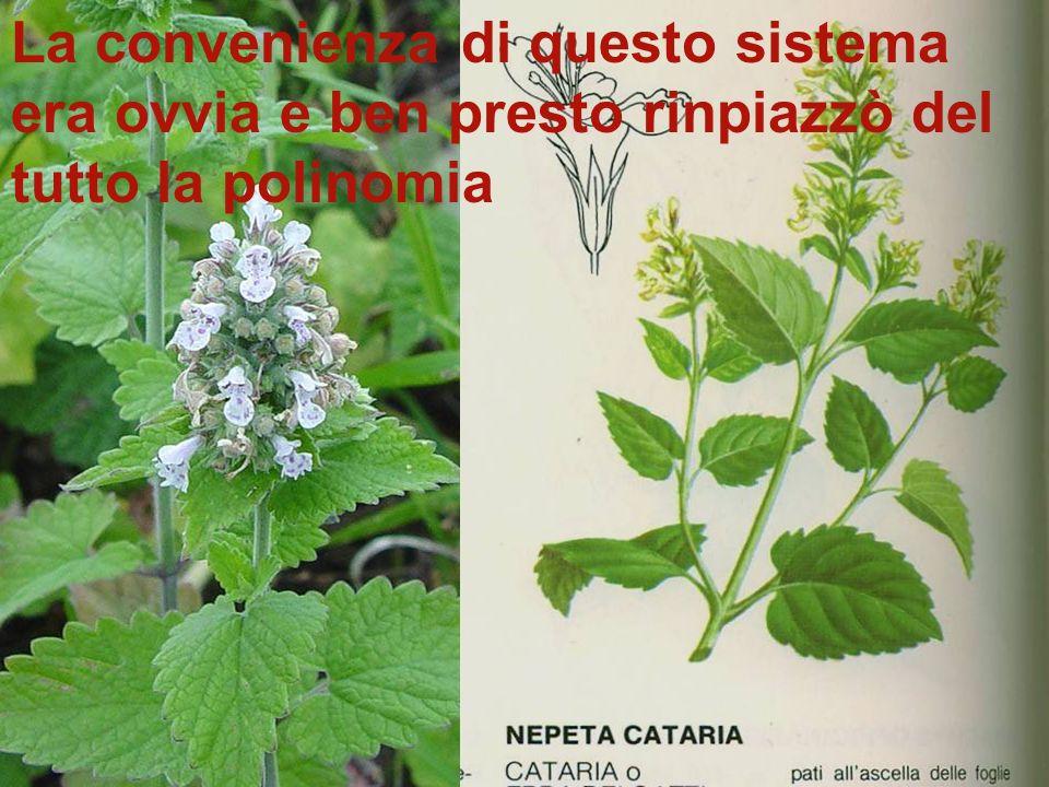 Ecco qui riprodotto la gattaia o erba gatta Essa era così descritta nellopera di Linneo: Nepeta floribus interrupta spicatum pedunculatis –nepeta con