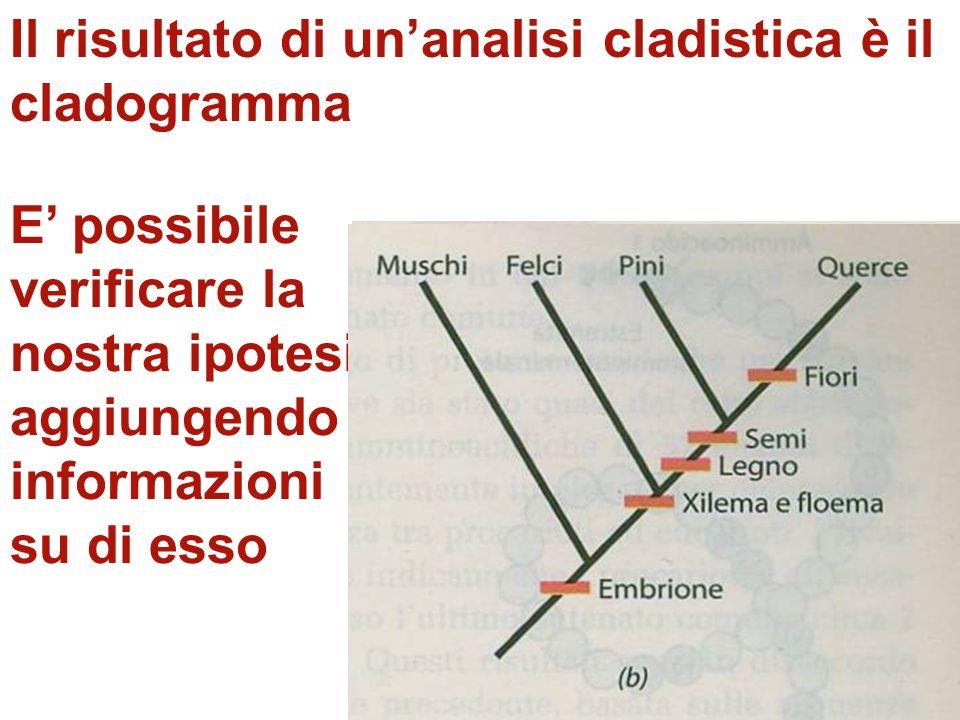 Il metodo cladistico, oggi il più comunemente usato, cerca di comprendere esplicitamente le relazioni filogenetiche. Il risultato di unanalisi cladist