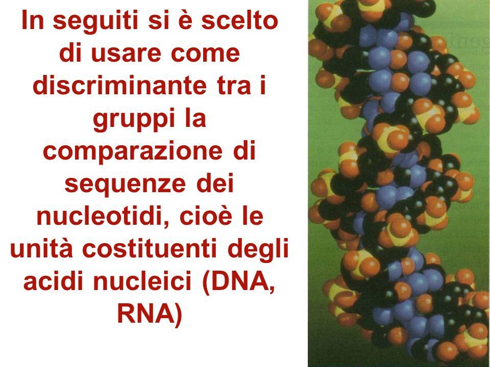 Si è potuto così determinare un nuovo modello di albero filogenetico In esso sui rami principali vengono riportati, attraverso numeri, quanti amminoac