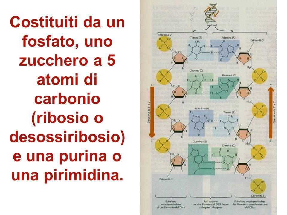 In seguiti si è scelto di usare come discriminante tra i gruppi la comparazione di sequenze dei nucleotidi, cioè le unità costituenti degli acidi nucl