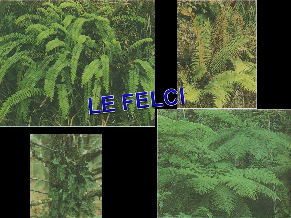 Le briofite sono le prime piante che si sono evolute dallacqua alla terra ferma sviluppando un sistema riproduttivo nuovo risolvendo molti problemi esistenziali il maggiore dei quali è stato quello di evitare la disidratazione.