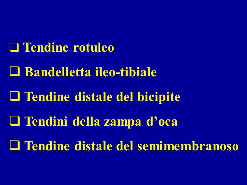Tendine rotuleo Bandelletta ileo-tibiale Tendine distale del bicipite Tendini della zampa doca Tendine distale del semimembranoso