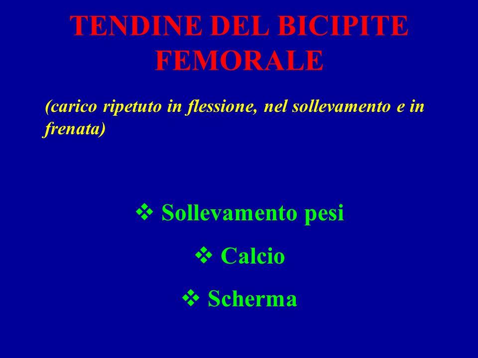 TENDINE DEL BICIPITE FEMORALE (carico ripetuto in flessione, nel sollevamento e in frenata) Sollevamento pesi Calcio Scherma