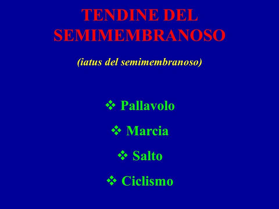 TENDINE DEL SEMIMEMBRANOSO (iatus del semimembranoso) Pallavolo Marcia Salto Ciclismo