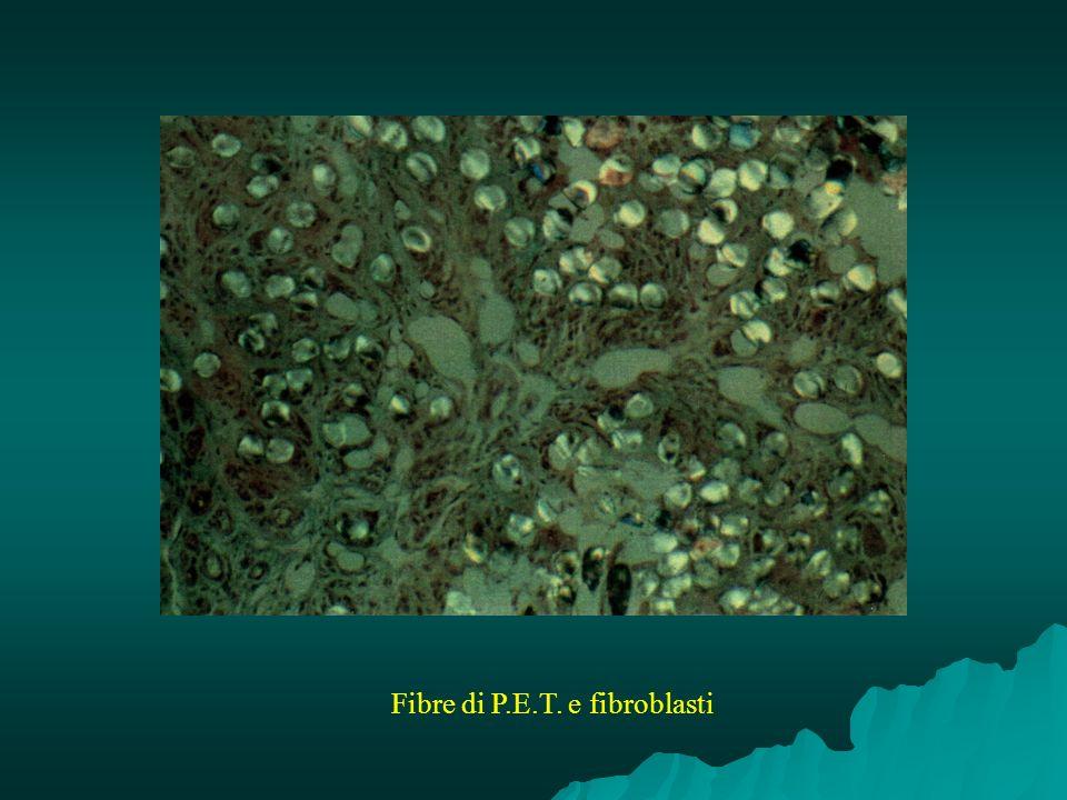 Fibre di P.E.T. e fibroblasti