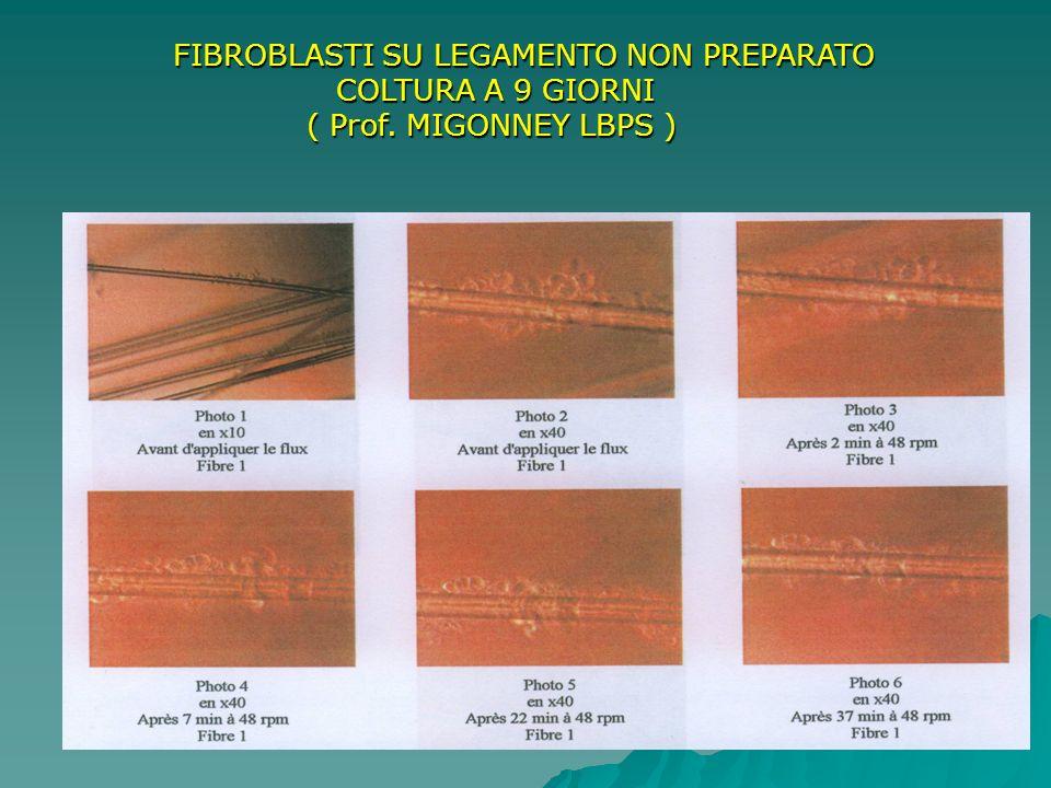 FIBROBLASTI SU LEGAMENTO NON PREPARATO FIBROBLASTI SU LEGAMENTO NON PREPARATO COLTURA A 9 GIORNI COLTURA A 9 GIORNI ( Prof. MIGONNEY LBPS ) ( Prof. MI