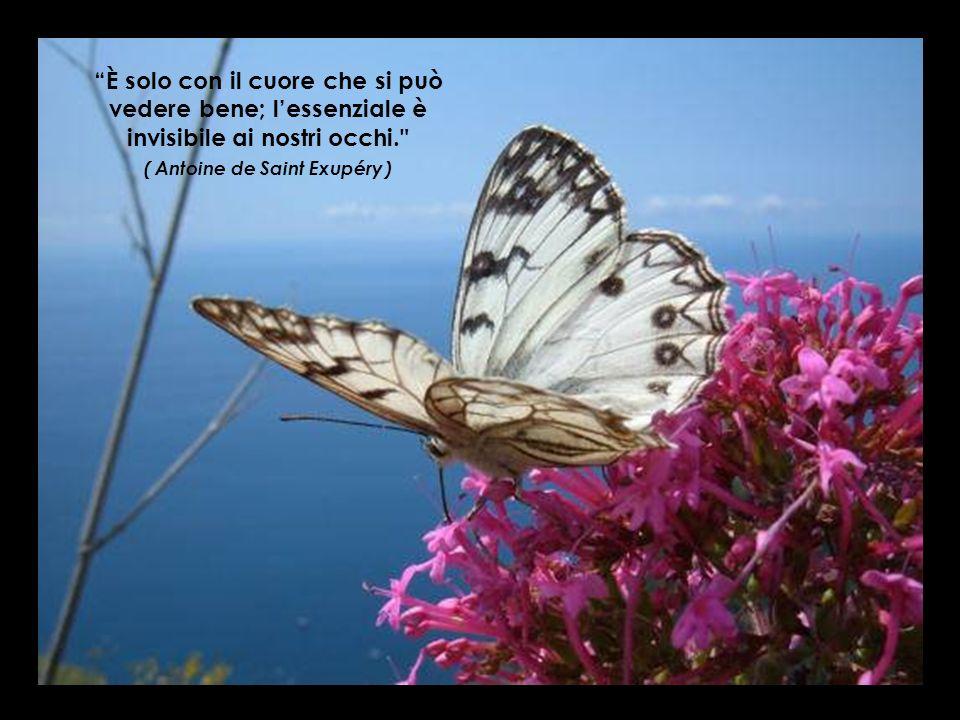 Vivere senza amare non è realmente vivere. ( Molière )