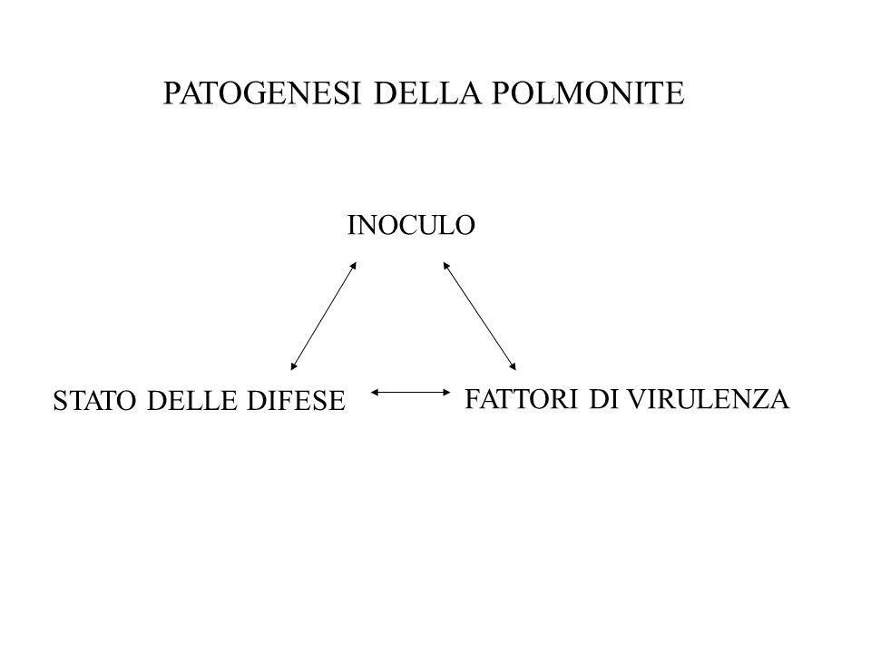 PATOGENESI DELLA POLMONITE INOCULO STATO DELLE DIFESE FATTORI DI VIRULENZA