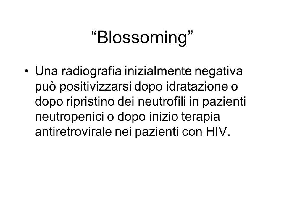Blossoming Una radiografia inizialmente negativa può positivizzarsi dopo idratazione o dopo ripristino dei neutrofili in pazienti neutropenici o dopo inizio terapia antiretrovirale nei pazienti con HIV.