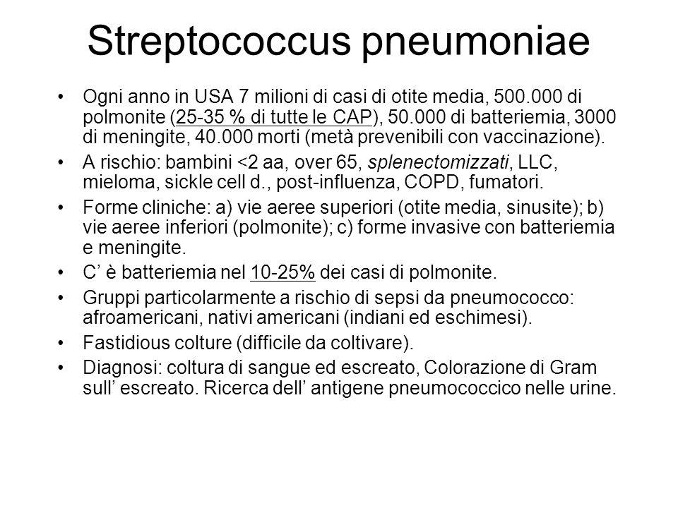 Ogni anno in USA 7 milioni di casi di otite media, 500.000 di polmonite (25-35 % di tutte le CAP), 50.000 di batteriemia, 3000 di meningite, 40.000 morti (metà prevenibili con vaccinazione).