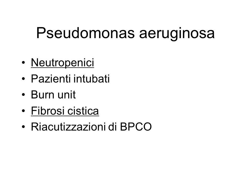 Pseudomonas aeruginosa Neutropenici Pazienti intubati Burn unit Fibrosi cistica Riacutizzazioni di BPCO