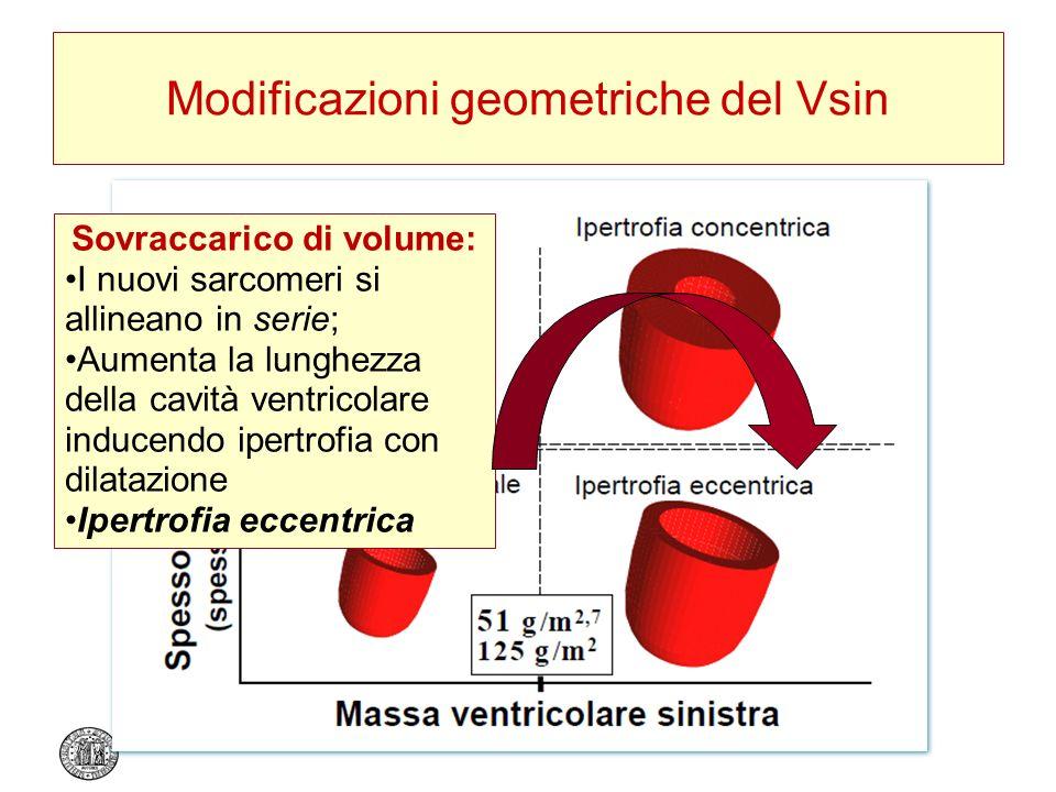 Modificazioni geometriche del Vsin Sovraccarico di volume: I nuovi sarcomeri si allineano in serie; Aumenta la lunghezza della cavità ventricolare ind