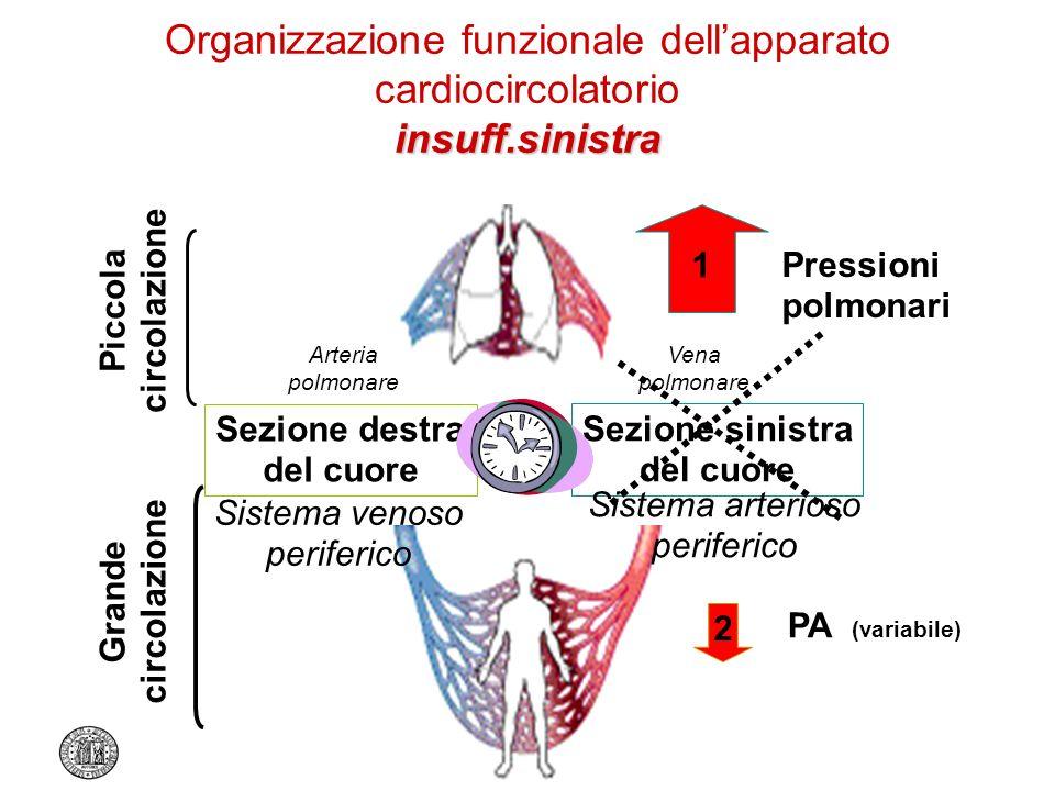 insuff.sinistra Organizzazione funzionale dellapparato cardiocircolatorio insuff.sinistra Sezione destra del cuore Sezione sinistra del cuore Arteria