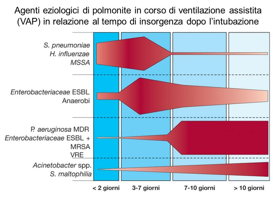 Agenti eziologici di polmonite in corso di ventilazione assistita (VAP) in relazione al tempo di insorgenza dopo lintubazione