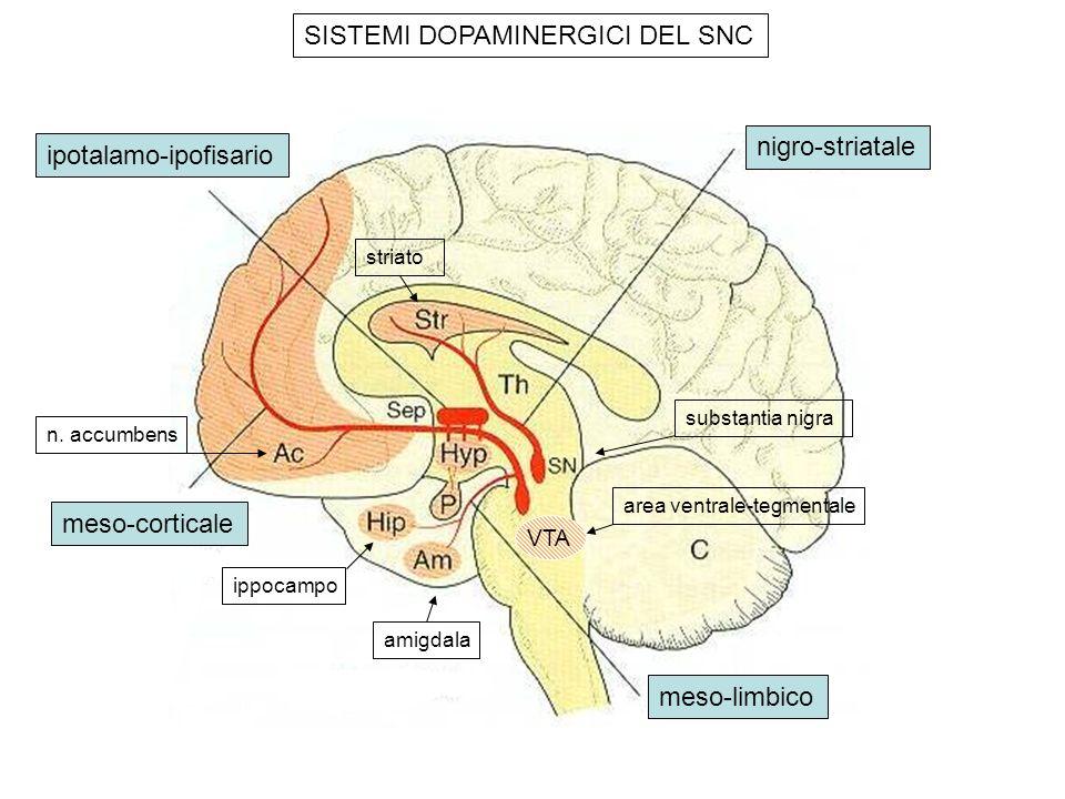 SISTEMI DOPAMINERGICI DEL SNC nigro-striatale ipotalamo-ipofisario meso-limbico meso-corticale area ventrale-tegmentale n. accumbens ippocampo amigdal