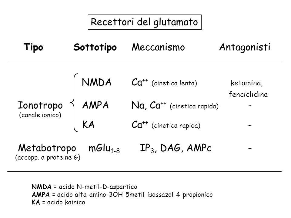 TipoSottotipoMeccanismoAntagonisti NMDACa ++ (cinetica lenta) ketamina, fenciclidina Ionotropo AMPANa, Ca ++ (cinetica rapida) - (canale ionico) KACa
