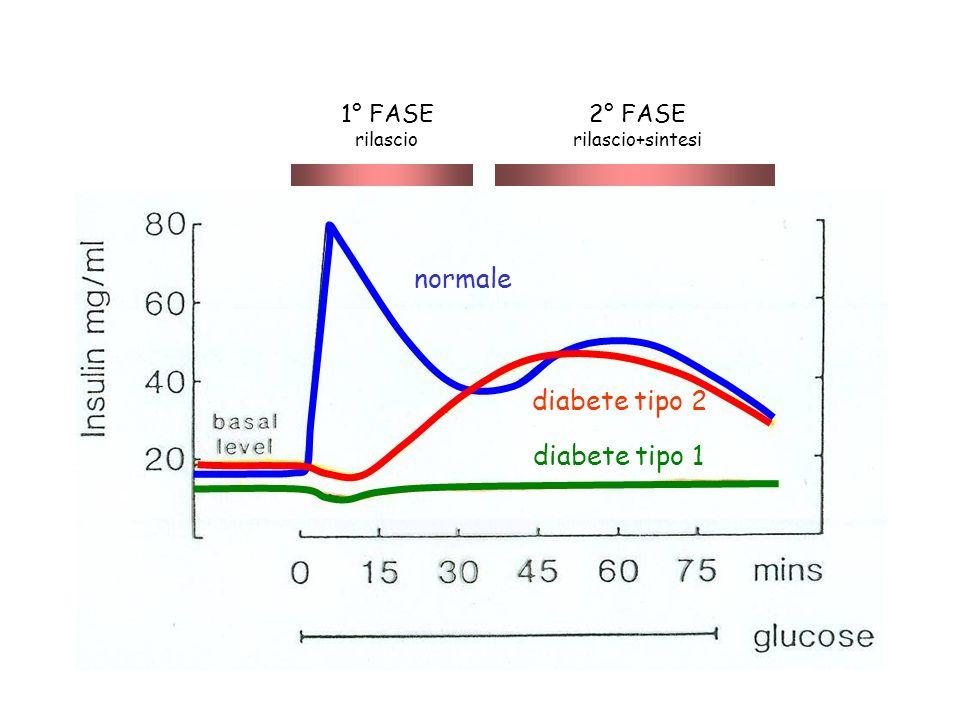 normale diabete tipo 2 diabete tipo 1 1° FASE rilascio 2° FASE rilascio+sintesi