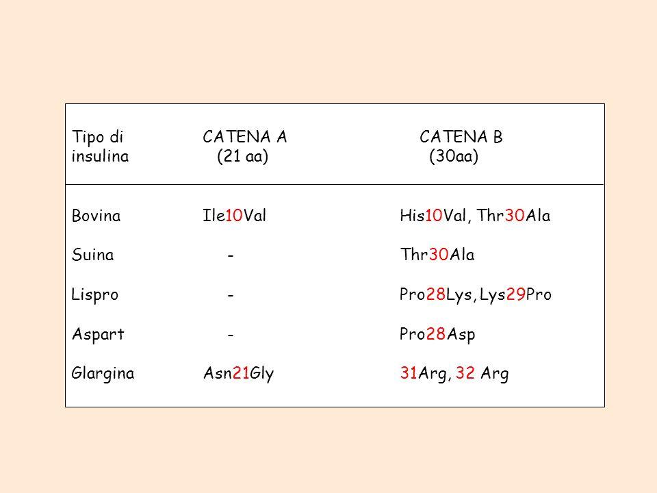 Tipo diCATENA A CATENA B insulina (21 aa) (30aa) BovinaIle10ValHis10Val, Thr30Ala Suina -Thr30Ala Lispro -Pro28Lys, Lys29Pro Aspart -Pro28Asp Glargina
