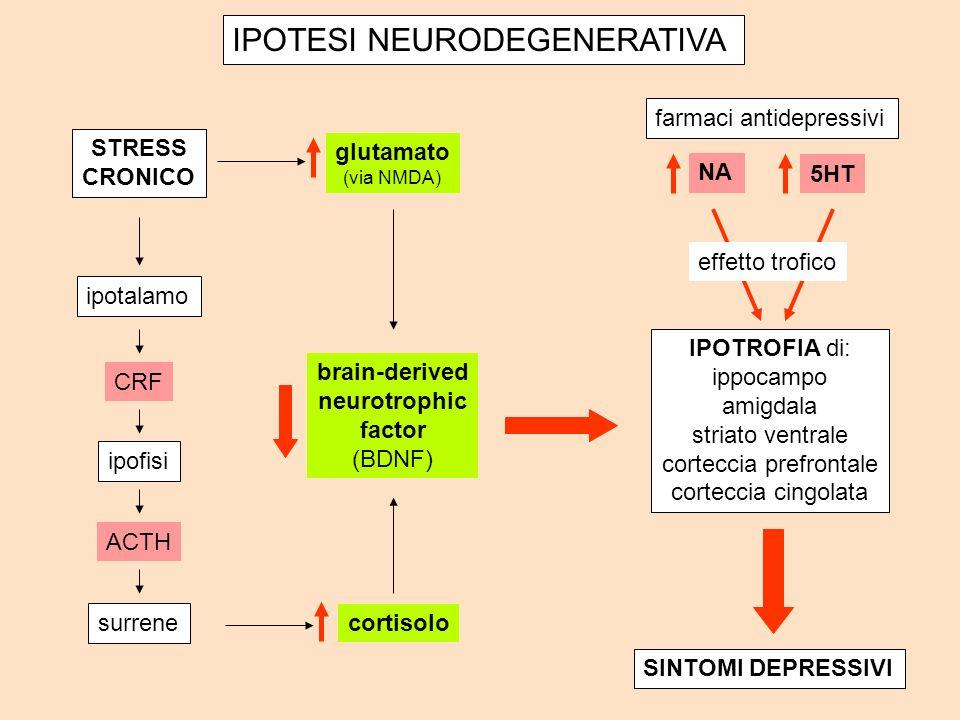 STRESS CRONICO ipotalamo ipofisi surrene IPOTROFIA di: ippocampo amigdala striato ventrale corteccia prefrontale corteccia cingolata glutamato (via NMDA) NA 5HT cortisolo SINTOMI DEPRESSIVI CRF ACTH brain-derived neurotrophic factor (BDNF) farmaci antidepressivi effetto trofico IPOTESI NEURODEGENERATIVA